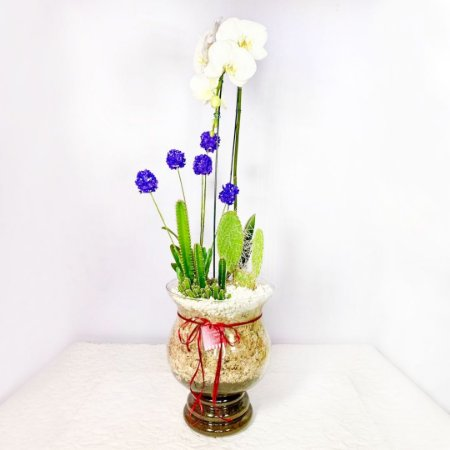 Terrário Mega Orquídea