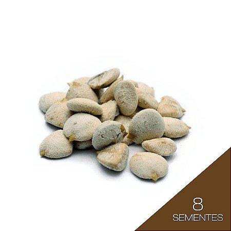 Noz da Índia (kit c/ 08 sementes)