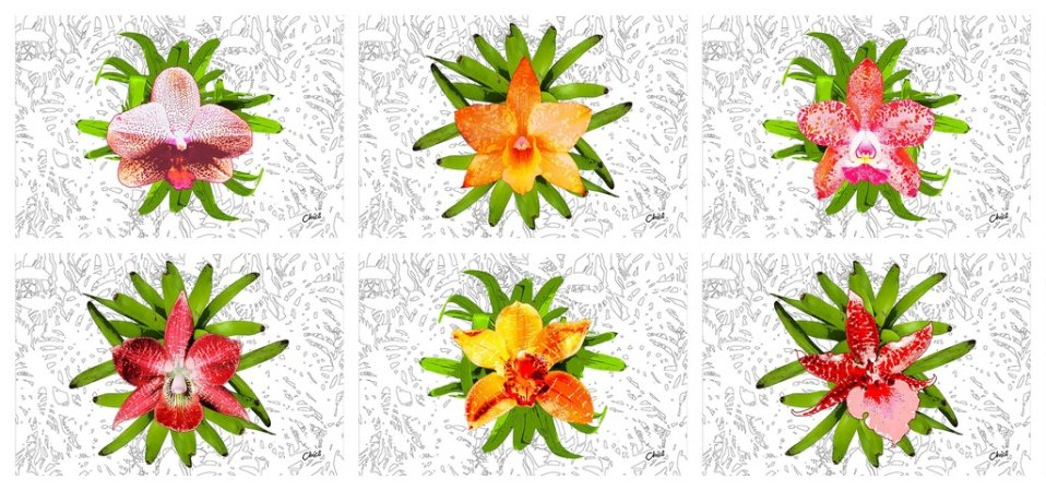Jogos Americanos - Orquídeas (6 unidades)