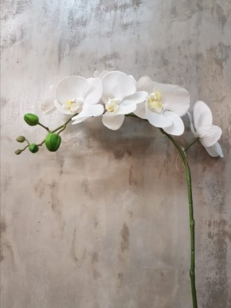 Orquídea Phalaenopsis Branca Premium