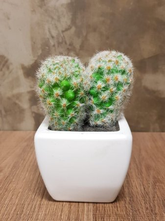 Mini Suculenta - Vaso de Cerâmica