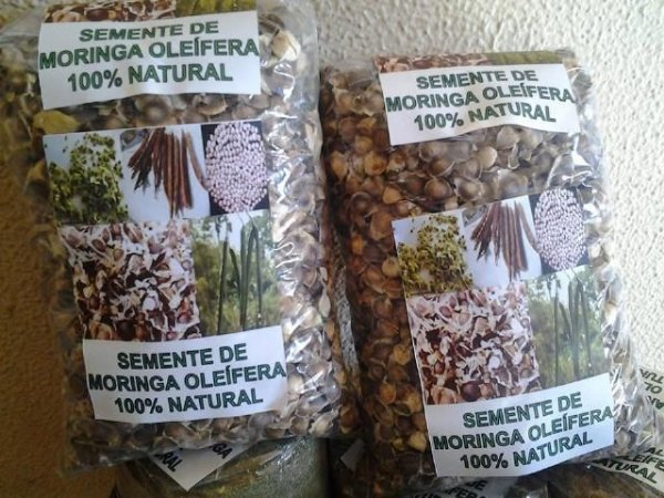 sementes moringa,moringa sementes,semente moringa c/ 1.000 un.