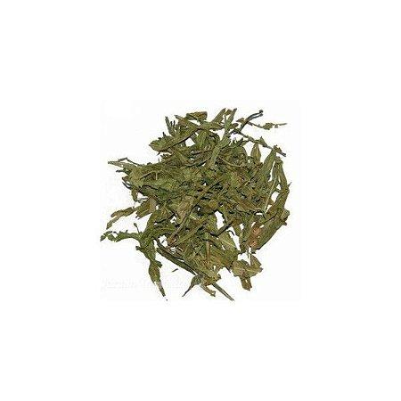 sinicuichi (heimia salicifolia, sun opener), 40 grs folhas