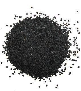 sementes san pedro (t. pachanoi) c/ 100 un