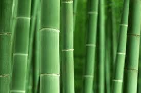 Essência Contratipo Bamboo M Martan