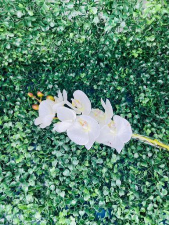 Haste Orquídea Branca DM0013