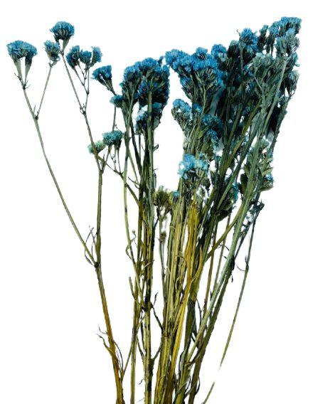 Maço de Estatice Desidratada Azul
