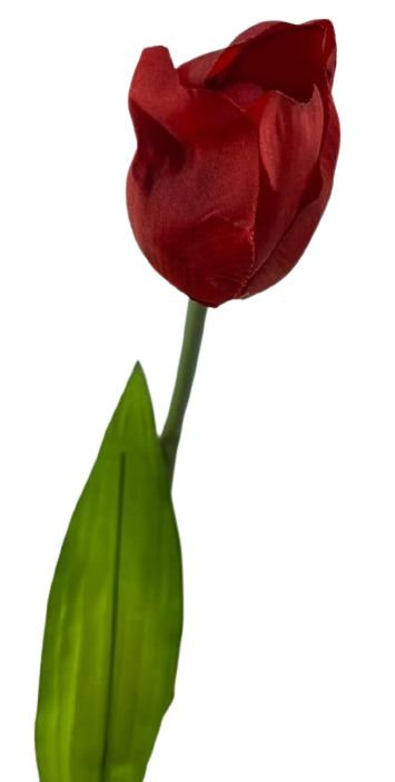 Haste Tulipa Cores Sortidos DT03