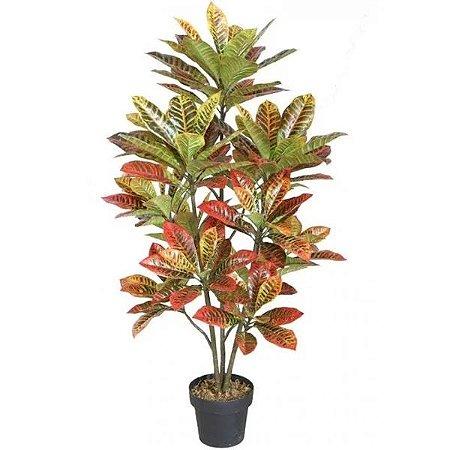 Codiaeum variegatum  -Cróton Variado Pote 17
