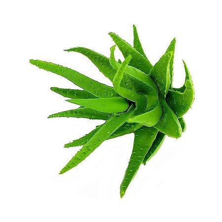 Suculenta Aloe Cacto em Silicone Verde