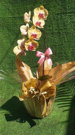 Orquídea Cascata Grande