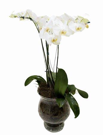 Orquídea plantada em jarra especial