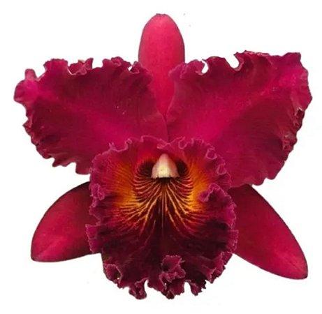 Elegiância floral