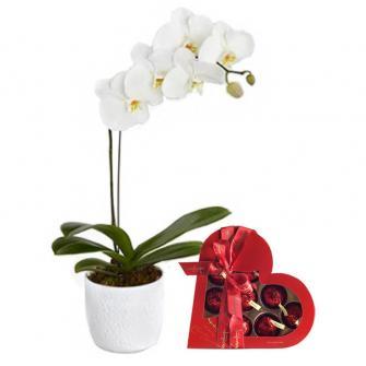 Orquídea Plantada + Cherry Brandy