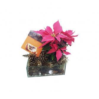 Planta Natal com Panettone Avelã