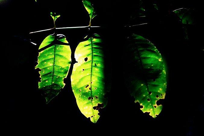 Quadro Decorativo Folha Verde