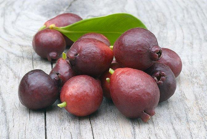 Araçá Vermelho Deliciosa Frutífera 10 sementes + Brinde