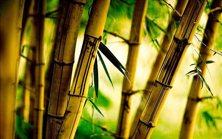 Muda De Bambu Brasileiro Com 80 Cm Paisagismo E Construção + Brinde