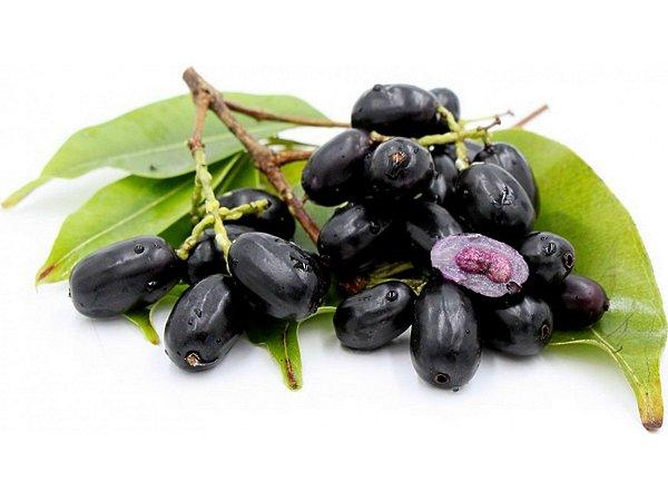 Muda de Jamelão Fruta medicinal + Brinde