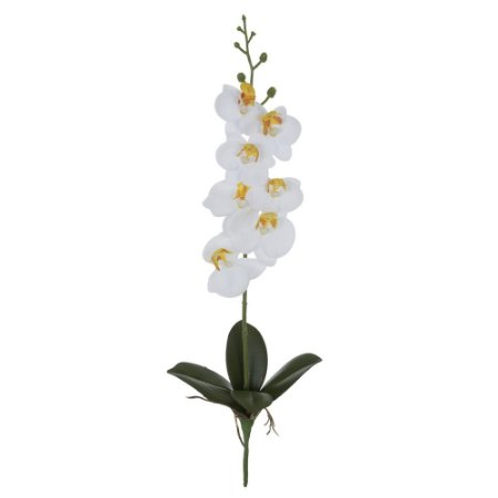 Orquídea Phalaenopsis Real Toque (Haste com 7 Flores e 4 Folhas com Raiz) 45cm - Branco