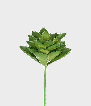 Suculenta Jade 14cm - Verde