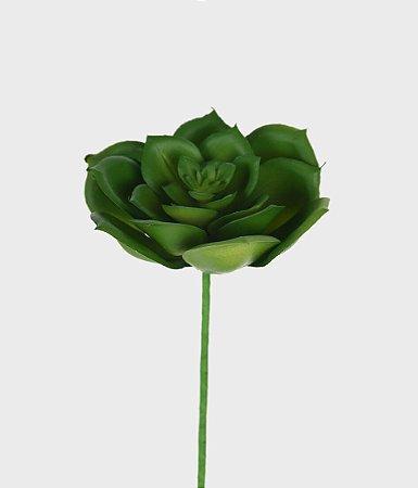 Suculenta Echeveria 11cm - Verde