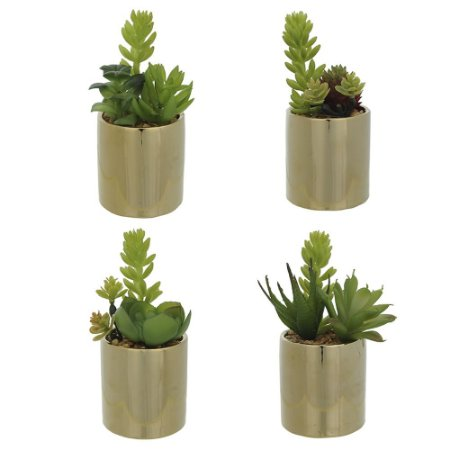 Mini Suculenta (Sortida) 13cm - Vaso Dourado