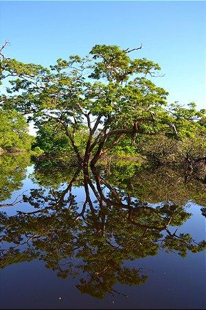 REFLEXÃO AMAZÔNICA 2