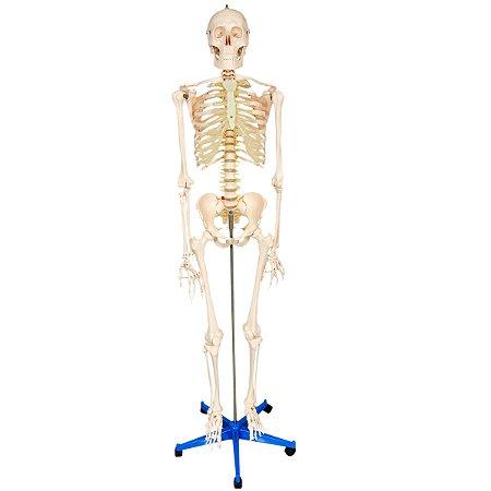Esqueleto 170 cm, Padrão, Com Suporte e Base Com Rodas TGD-0101