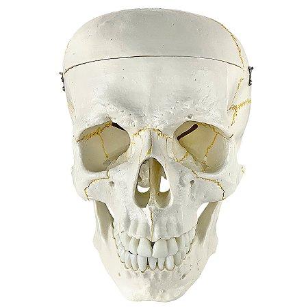 Crânio em 2 Partes TGD-0102
