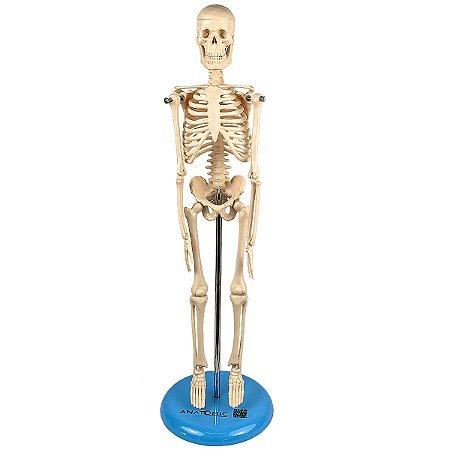 Esqueleto de 45 cm TGD-0121