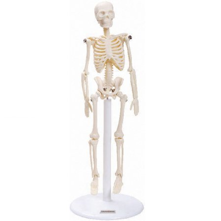 Esqueleto de 20 cm TGD-0131