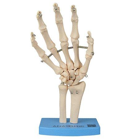 Esqueleto da Mão com Ossos do Punho TGD-0157-B