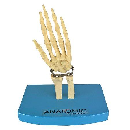 Mini Esqueleto da Mão TGD-0162-B