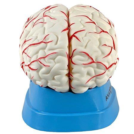 Cérebro com Artérias em 8 Partes TGD-0303