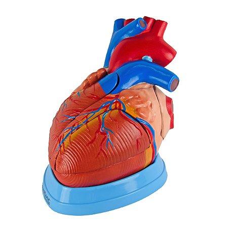 Coração Ampliado, em 5 Partes TGD-0322-A
