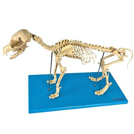 Esqueleto de Cachorro em Resina TGD-0601