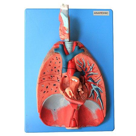Sistema Respiratório e Cardiovascular, Luxo, em 7 Partes TZJ-0318-A