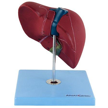 Fígado Básico TZJ-0324-A