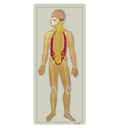 Sistema Nervoso em Placa TZJ-0328-B
