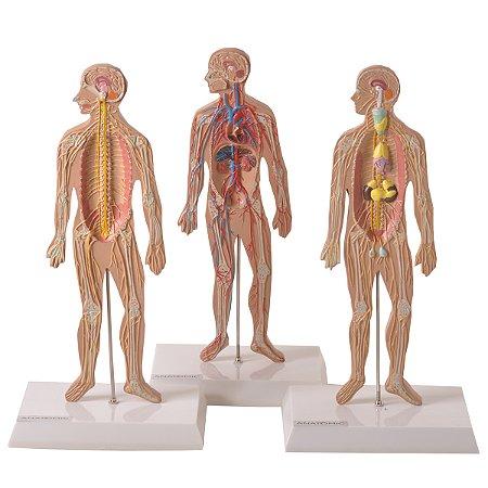 Conjunto de Pranchas para Iniciação ao Estudo Anatômico dos Principais Sistemas do Corpo Humano TZJ-0328-K