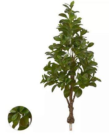 Planta Árvore Artificial Clúsia Verde Real Toque 1,30m