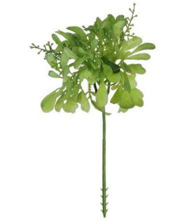 Folhagem Pick Aglaia Suculenta 20 cm