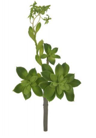 Folhagem Suculenta C/Coat 24 cm