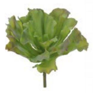 Folhagem Suculenta com Print  PLT. (Verde) 20 cm