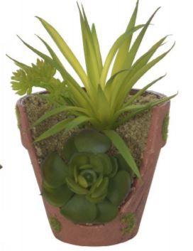 Folhagem de 2 Suculentas Sortidas Com Vaso 13 cm