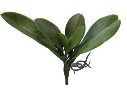 Folhagem Folha Orquídea Real Toque C/Raiz X5 (VERDE) 36cm