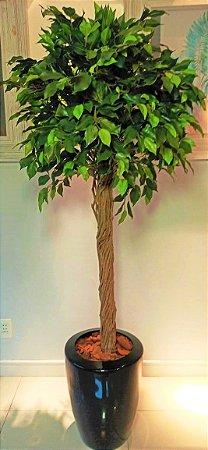Ficus com Vaso de Vibra de Vidro