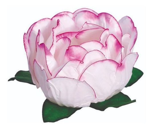 Forminha Bela Branco Borda Pink