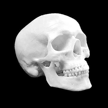 Crânio Articulado